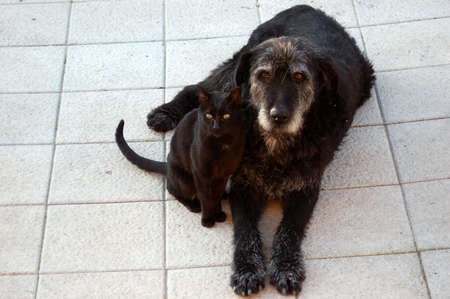 Cuties dog and cat, friends for ever.