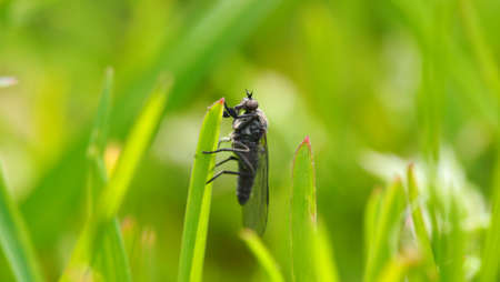 Big fly resting on the grass in a sunny day. Banco de Imagens