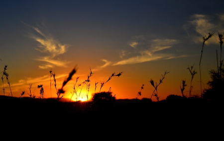 north africa: Grass sunset Stock Photo