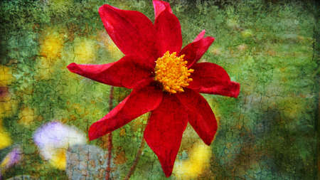 Red Dahlia flower ,with the texture  photo