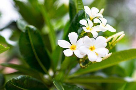 wallpapaer: white flower