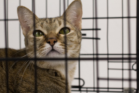 gray cat: Cat looking up with cage Stock Photo