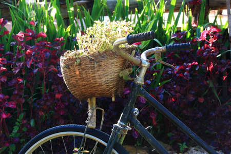 small tree: Close Up of A Bike Basket Contains Small Tree