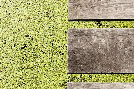 helechos: Los tablones de madera sobre el agua Ferns