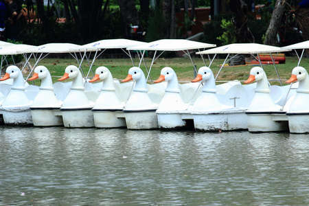 nat: Row of White Swan Boats Floating On Green Water In the Park