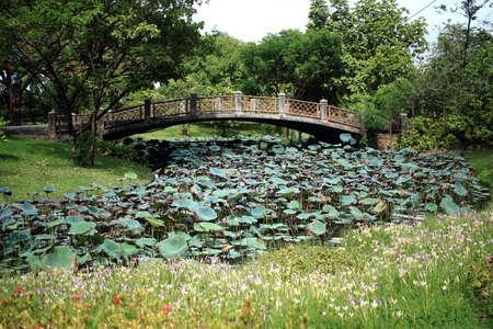 across: Cement Bridge Across Water Lily Field Stock Photo