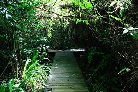 Wooden Walking Routes In Rain Forest
