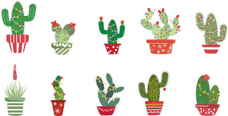 a collection of Christmas Cactus for my southwestern neighbors Ilustracja