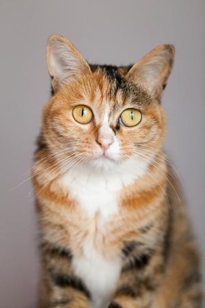 critter: Yellow cat Stock Photo