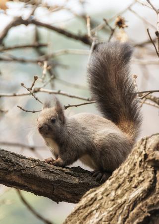 squirrel Zdjęcie Seryjne