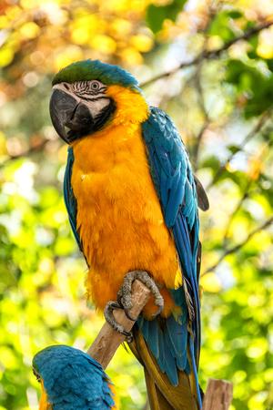 parrot close up Zdjęcie Seryjne