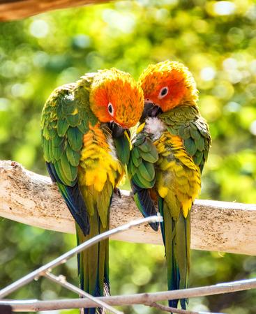 parrot Zdjęcie Seryjne