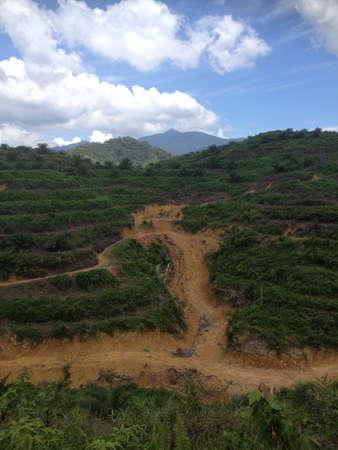 replanting: renok baru gua musang