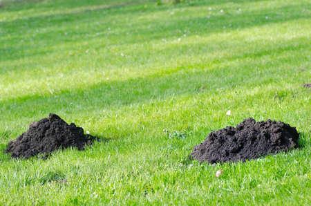 molehill: mole molehill on the grass in park