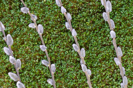 detail of fresh green cress photo
