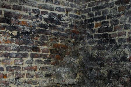 old bricks wall in cellar photo