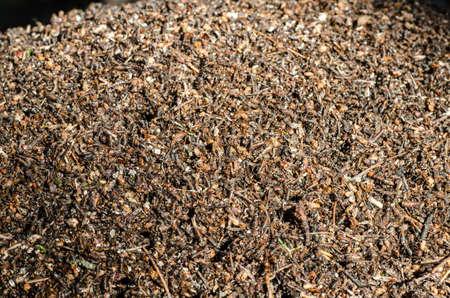 ameisenhaufen: Nahaufnahme von Waldameisenhaufen Lizenzfreie Bilder