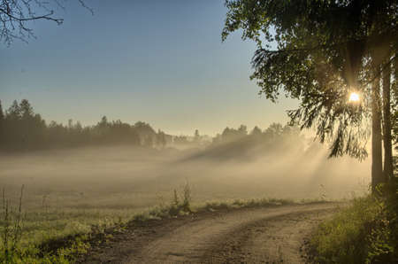 country road in forest at dawn, hdr photo