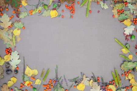 autumn forest frame on grey background photo