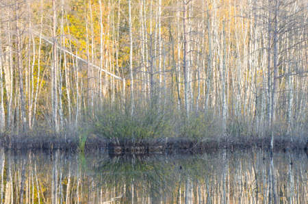 bogs: fall forest reflection in lake