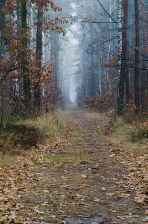 footpath in autumn forest on  foggy morning photo