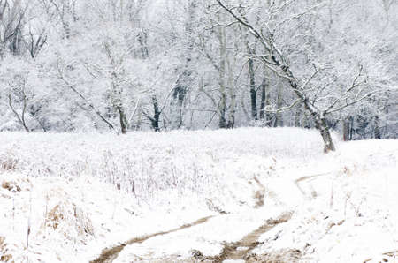 winterly: winter landscape with country road and trees Stock Photo