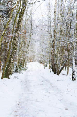 winter dirt road in forest covered with snow in Poland photo