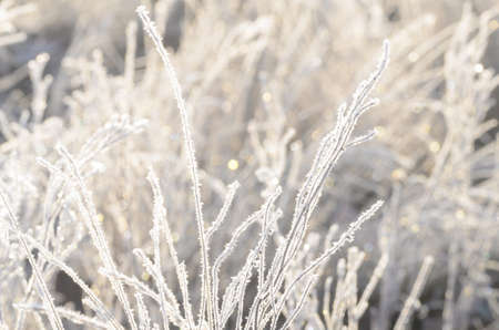 closeup of frost on  grass on sunny winter morning Stock Photo