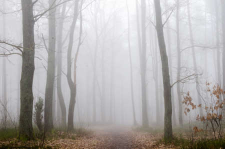seaonal: forest road in foggy morning
