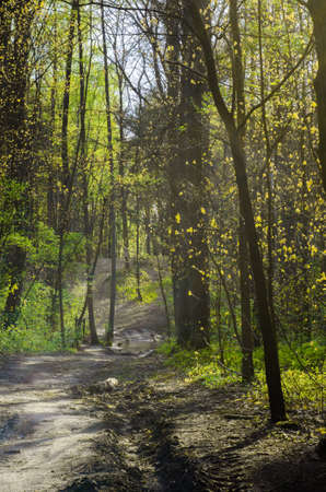 deciduous woodland: footpath in spring forest on sunny day Stock Photo
