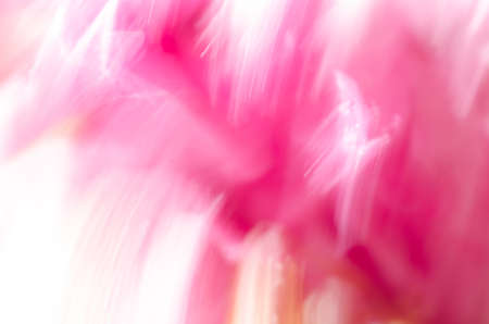 pastel colour: pink nature blurred background from peony flowers