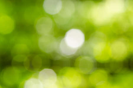 green nature: Defocused abstract green nature