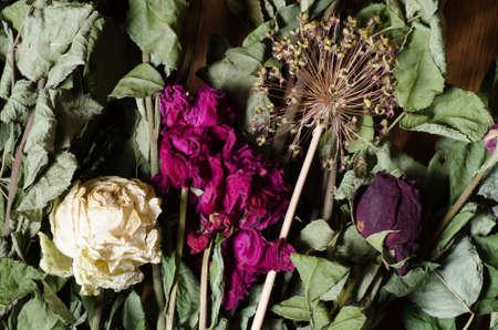 flores secas: composici�n de flores secas varoius Foto de archivo