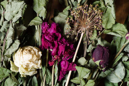 dried flowers: composition of varoius dried flowers Stock Photo