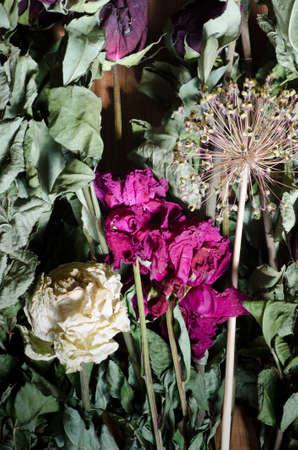 fiori secchi: Composizione di fiori secchi varoius