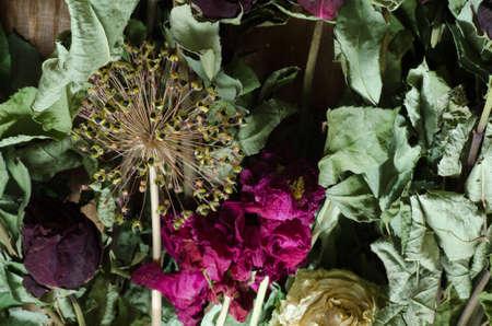 flores secas: composición de flores secas varoius Foto de archivo