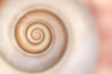 spiral snail shell macro background, shallow depth of field Foto de archivo