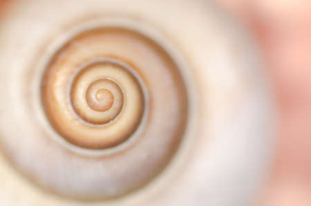 spiral snail shell macro background, shallow depth of field Stock Photo