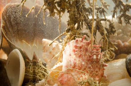 aquarium hobby: closeup  shells composition in aquarium Stock Photo