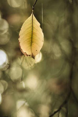 twig: autumn leaves on tree twig Stock Photo