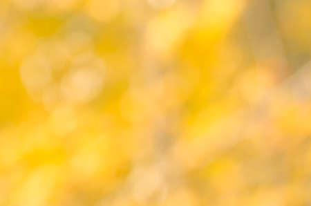 golden texture: defocused yellow autumn nature background