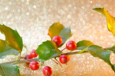 green christmas lights: Christmas holly o glittering golden background Stock Photo