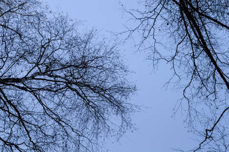 gloaming: bare tree branches against dark sky