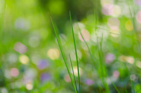 groundcover: fresh grass in spring forest groundcover Stock Photo