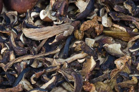 uncultivated: group of dried uncultivated edible mushrooms