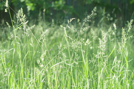 closeup to blooming grass in forest