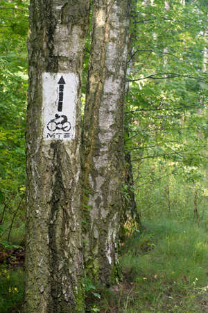 painted wood: bike trail sign on tree bark Stock Photo
