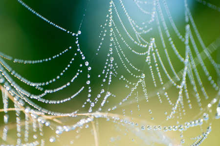 spiderweb with dew drops in morning macro selective focus