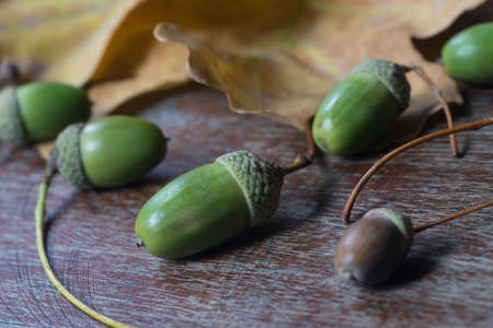 oak acorns and leaves on wooden table background selective focus