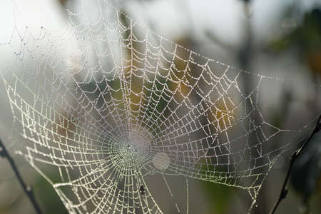 morning dew on spider web selective focus macro